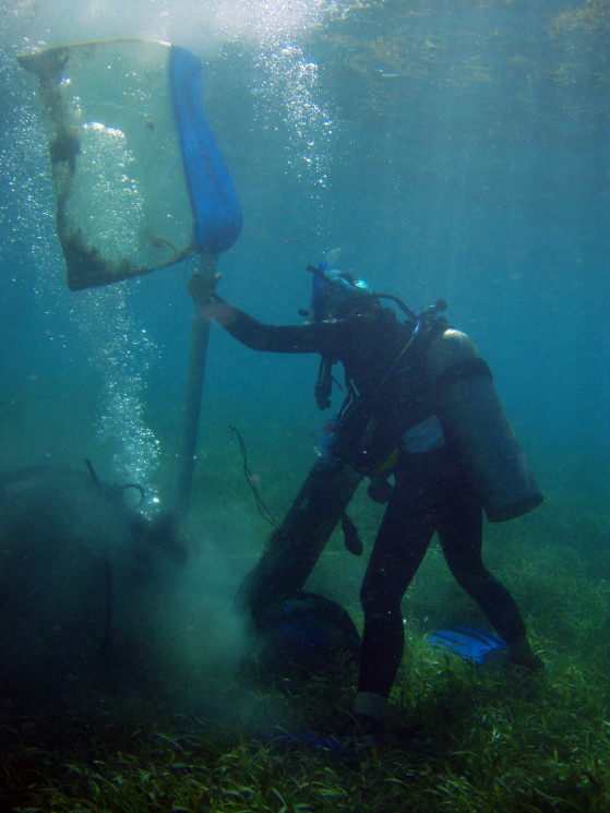 Dr. Feser coring a seagrass bed in St. Croix