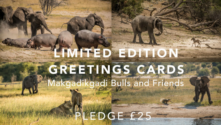 greetingcards-elephants